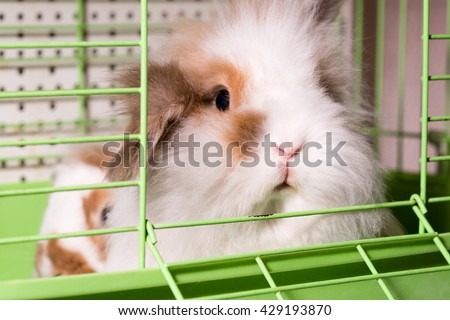 Spotted long-haired beige and white pet rabbit in a green cell