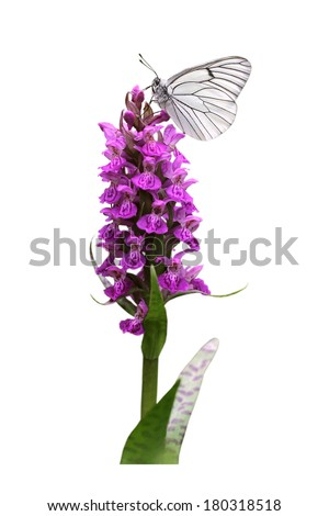 Spotted Orchid with butterfly - stock photo