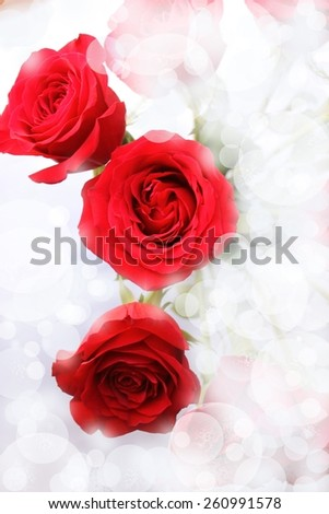 Spray of roses bokeh - stock photo