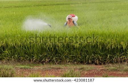Spray pesticides rice in the morning.Image has grain or blurry or noise and soft focus when view at full resolution. (Shallow DOF ).