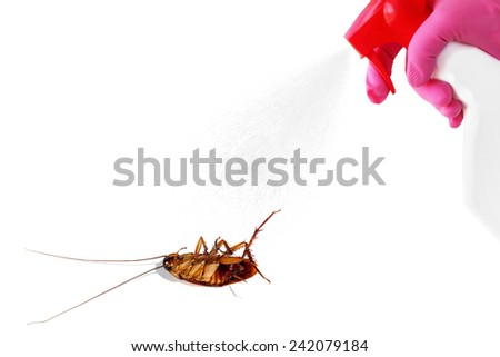 Sprayer with insecticide and pest insects isolated on white background. Pest control concept  - stock photo