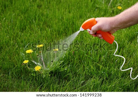 Spraying chemicals to kill Dandelions - stock photo