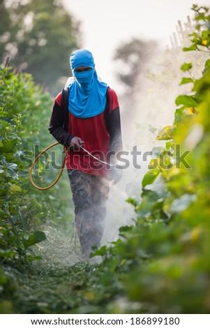 spraying pesticide - stock photo