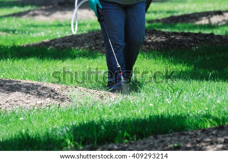 spraying pesticide in the lawn - stock photo