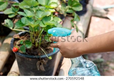 spraying the plant. - stock photo