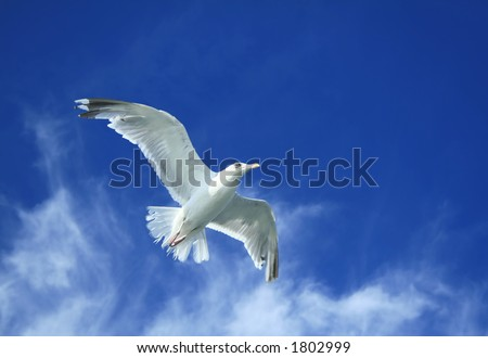 Spread your wings and take to the sky - stock photo