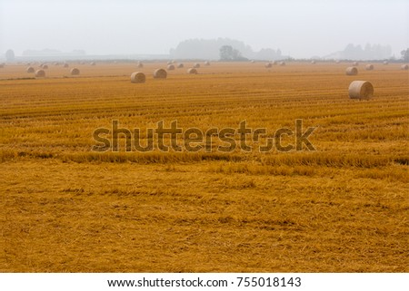 spreading hay bales in a field, immersed in the fog