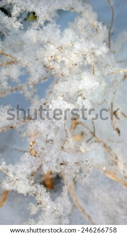 Sprig in fluffy snow flakes close up - stock photo