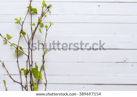 Sprig of birch trees with leaves just blossoming on white painted wooden background.and empty space for text. Top view with copy space. Spring time - stock photo