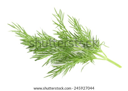 Sprig of dill isolated on white - stock photo
