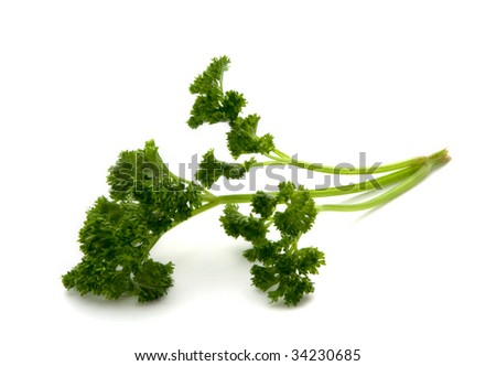 sprig of fresh parsley on a white background