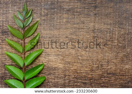 sprig of green leaves on the background wood texture - stock photo