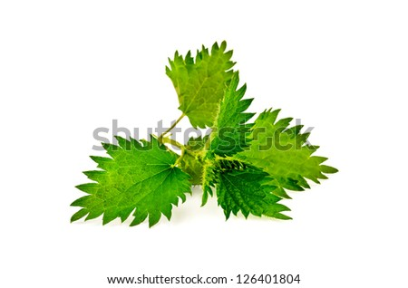 Sprig of green nettle isolated on a white background - stock photo