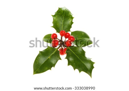 Sprig of holly isolated against white - stock photo