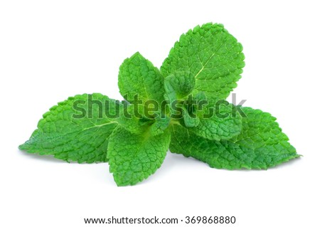 Sprig of mint isolated on white background. - stock photo