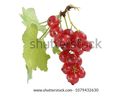 stock-photo-sprig-of-red-currant-with-gr