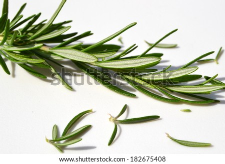 Sprig of thyme on white background - stock photo