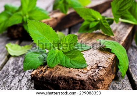 Sprigs of fresh green mint on a wooden surface