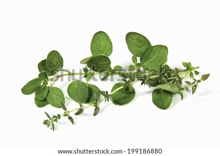 sprigs of freshly picked origanum and thyme - stock photo