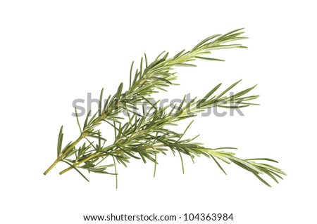 Sprigs of freshly picked rosemary herb isolated on white - stock photo
