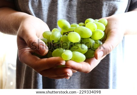 sprigs of green grapes in hands,raw fruits - stock photo