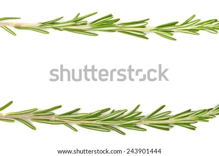 Sprigs of rosemary on a white background, frame. - stock photo