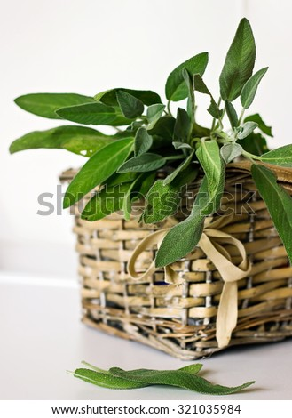 Sprigs of sage in a wicker basket - stock photo
