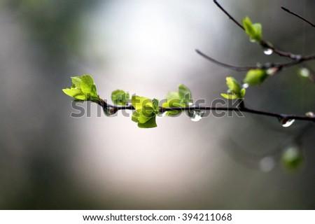 Spring after rain - stock photo