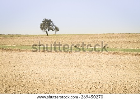 Spring agricultural fields with small  green plants and fallow plowed soil. Background. - stock photo