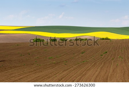Spring agricultural land plowing, sowing rape and blue sky - stock photo