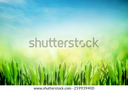 Spring and summer nature with morning sunshine - stock photo