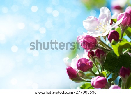 Spring apple blossom against clean blue sky - stock photo