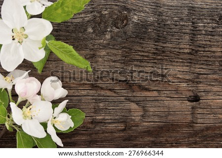 Spring apple tree blossom on rustic wooden background with space for greeting message. Mother's Day and spring background concept.