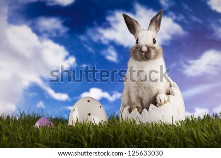 Spring baby bunny and green grass - stock photo