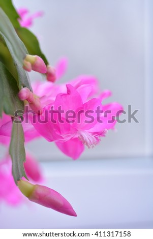 Spring background illustration for the web site banner. Schlumbergera plant blooms. Beautiful background for banner.