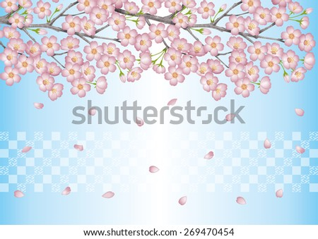Spring. Background illustration of cherry blossoms. / Japanese cherry blossom viewing events. Blue. Cherry blossom viewing. - stock photo