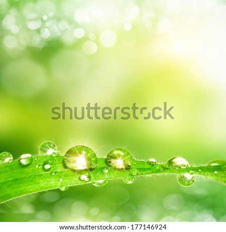 spring background. Leaves with dew drops - stock photo