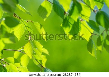 Spring background with a birch branch and fresh leaves - stock photo