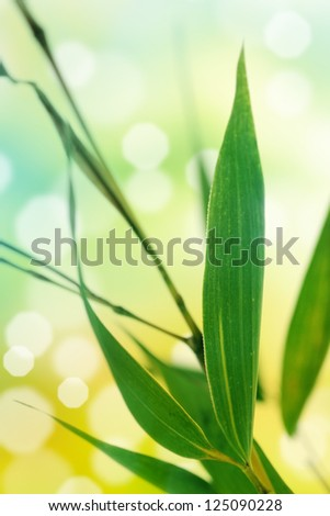 Spring background with bamboo leaves