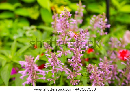Spring background with beautiful pink flowers  - stock photo