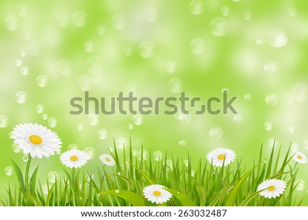Spring background with grass, daisies and bokeh lights.