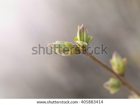 Spring background with green new buds on branch