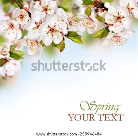 Spring background with white blossom - stock photo