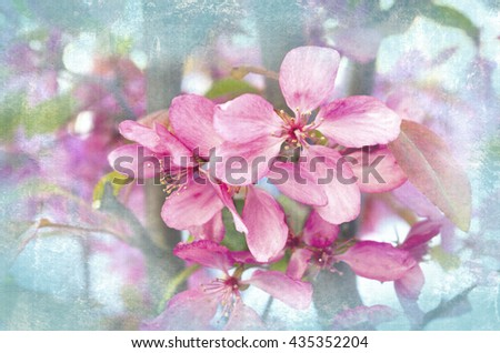 Spring beautiful blossoming branches. Springtime background. Close up. Spring branch of a tree, with blossoming pink flowers. Springtime flowering. - stock photo