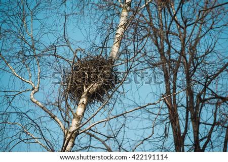 Spring  bird's nest in a birch tree with sky background. - stock photo