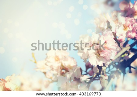 Spring bloom Background