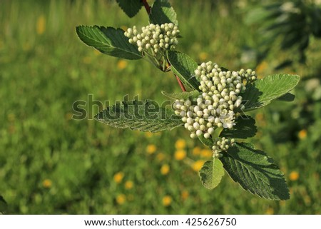 spring blooming branch - stock photo