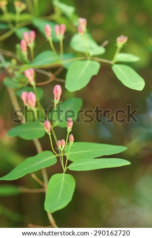 Spring blooming bush with small pink flowers - stock photo