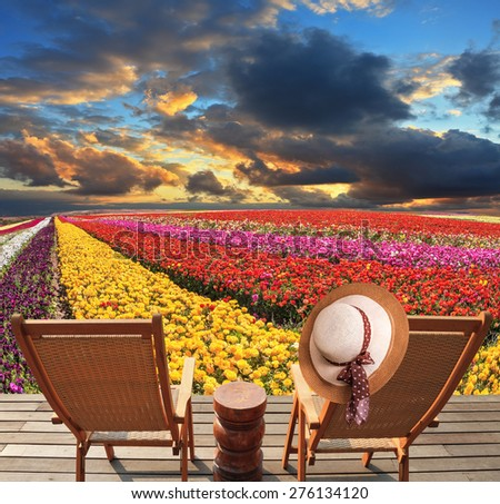 Spring blooming buttercups grow stripes of different colors. Two deck chairs on the platform are at the colorful flower fields. At one hanging elegant straw hat - stock photo