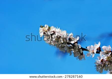 Spring blooming flowers branch - stock photo